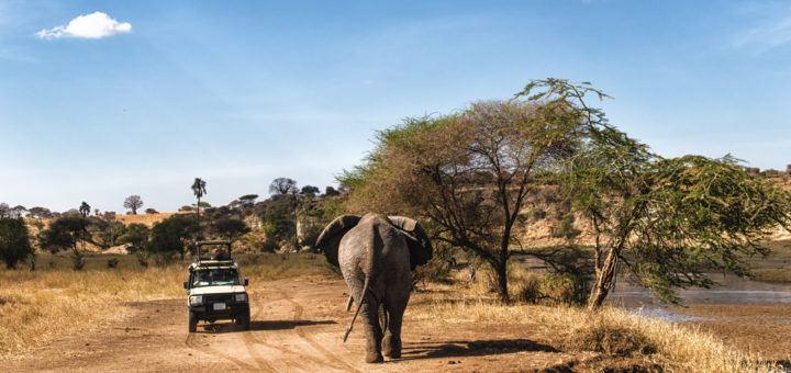 safari-i-tanzania